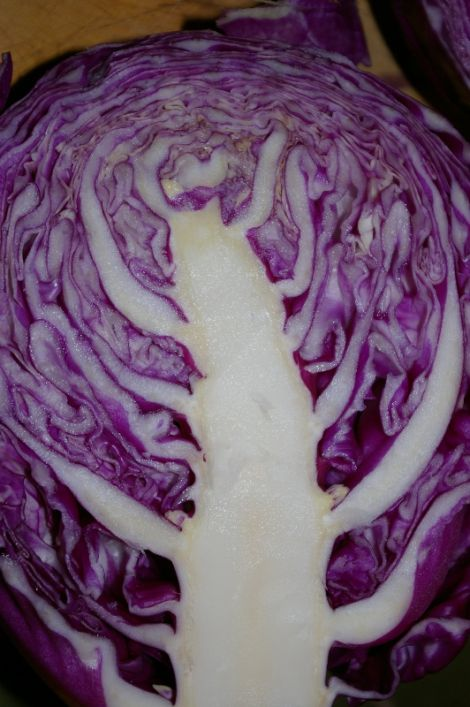 ...that most beautiful cabbage...