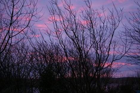 Pink winter sunset