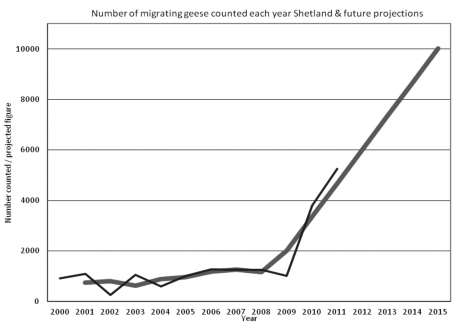 Number of migrating geese.
