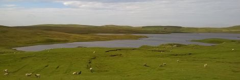 Dangerous waters: the Loch of Vaara, a popular fishing loch between Aith and Clousta, where an algal bloom caused the death of a dog on Monday.