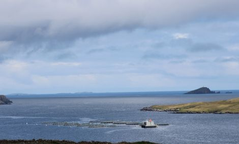 Laxfirth salmon farm, which shot more seals than any other salmon farm in 2013 and 2014, but now hopes to stop altogether thanks to new Econets. Photo Shetnews