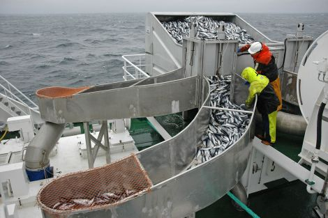 Almost 50,000 tonnes of pelagic species were landed in Shetland in 2016.