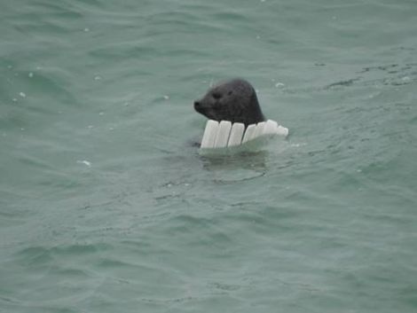 The group also saw a seal playing with polystyrene. Photos: Sean Whyte