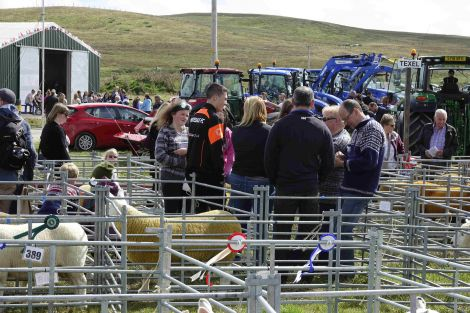 Cunningsburgh Show in full flow.