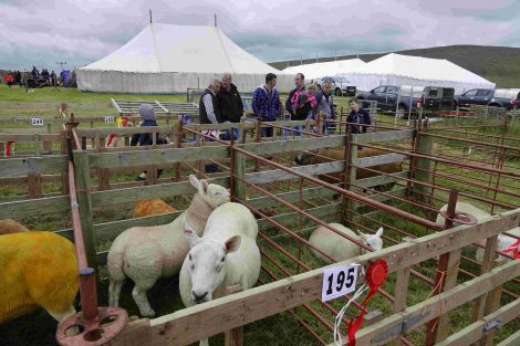 Some of the colourful exhibits at Voe Show. Photo: Peter Johnson/Shetland News